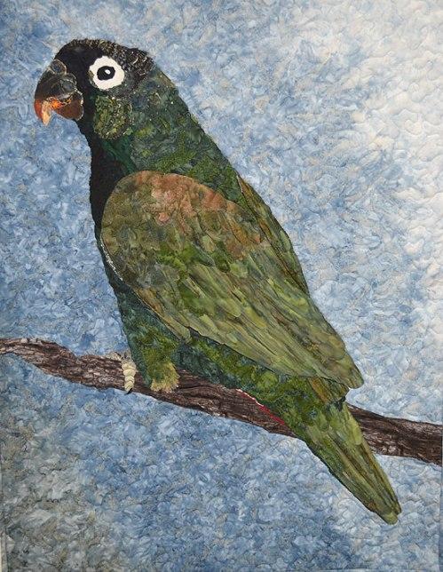 Ann P's parrot.