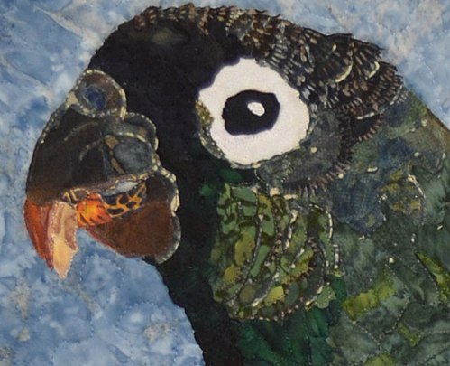 Ann P's parrot - up close.