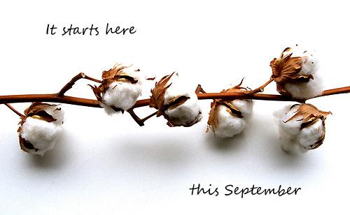 cotton-school